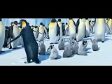 Марийские пингвины.